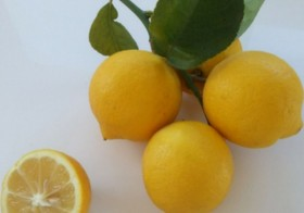 5kg Limones